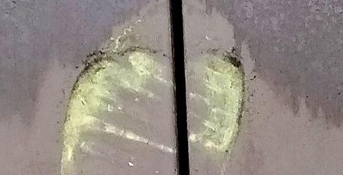 20190306_Pollen.jpg